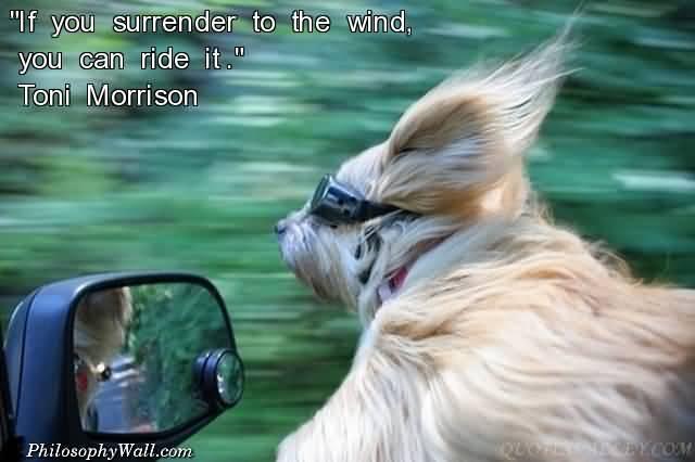 surrender8