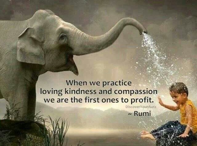 when-we-practice-loving-kindness-and-compassion-we-are-the-first-ones-to-profit